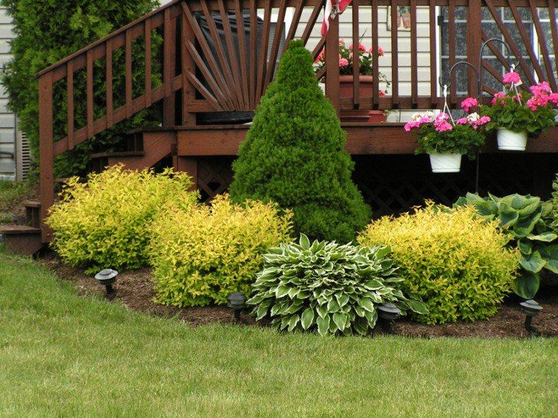 Цветы на садовом участке фото