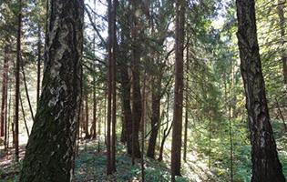 Поселок Венский лес